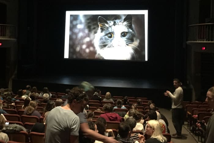CAT VIDEO FEST 2020, Feb 2020