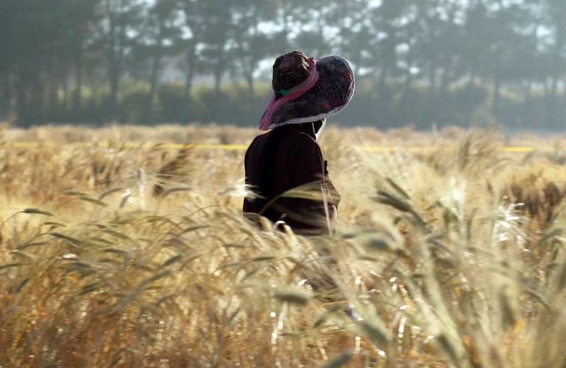 image from film WILD RELATIVES